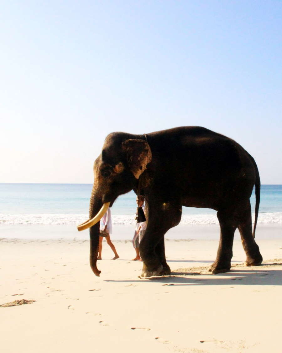 The Ultimate Andaman and Nicobar Guide Header Image